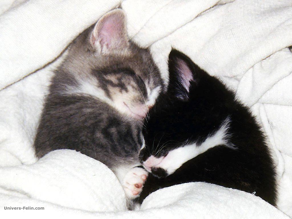 Fond d ecrans chat - Jeux d amour tout nu dans le lit ...