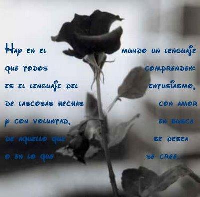 signification d une rose noire | la pilounette